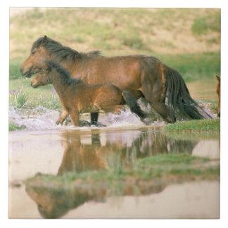 アジア、モンゴル、ゴビ砂漠。 野生の馬 タイル