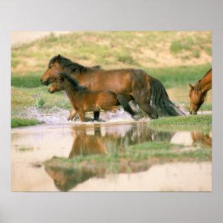 アジア、モンゴル、ゴビ砂漠。 野生の馬 ポスター