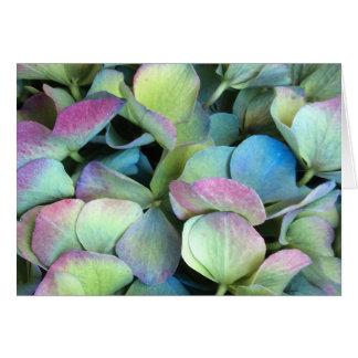 アジサイの多色刷りの花びら --- カード