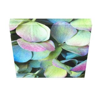 アジサイの多色刷りの花びら --- キャンバスプリント