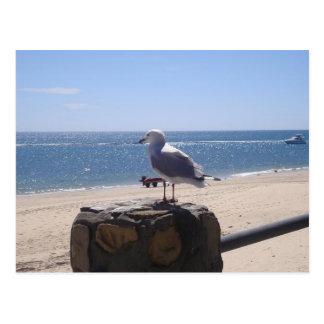 アデレード、南オーストラリアのビーチの海の鳥 ポストカード