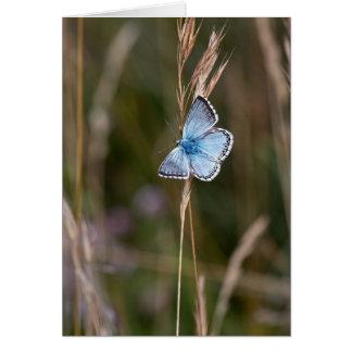 アドニスの青い蝶-挨拶状 カード