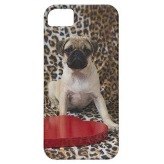 アニマルプリントに対して坐っているパグの子犬 iPhone SE/5/5s ケース