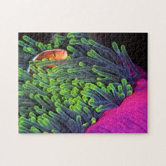 アネモネ、モザンビーク2に隠れているアネモネ魚 ジグソーパズル