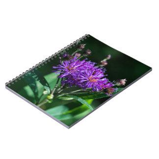 アパラチア山脈のしょうじょうはぐまの紫色の野生の花のノート ノートブック