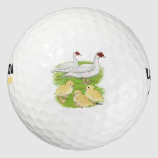 アヒルの白いMuscovy家族 ゴルフボール