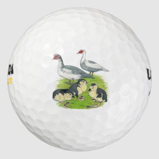 アヒルの青い雑色のMuscovy家族 ゴルフボール