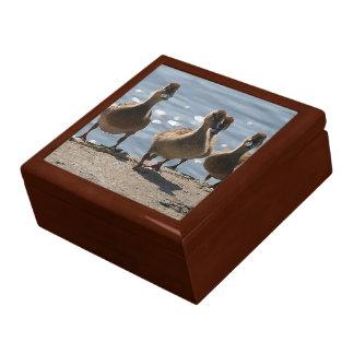 アヒルの鳥の野性生物動物の写真撮影 ギフトボックス
