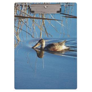 アヒルの鳥の野性生物動物の写真撮影 クリップボード