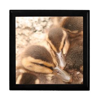 アヒルの鳥動物の野性生物の写真撮影 ギフトボックス