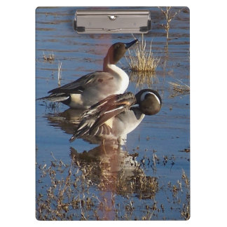 アヒルの鳥動物の野性生物の写真撮影 クリップボード