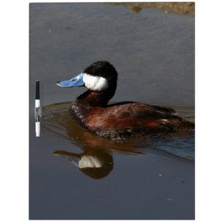 アヒルの鳥動物の野性生物の写真撮影 ホワイトボード