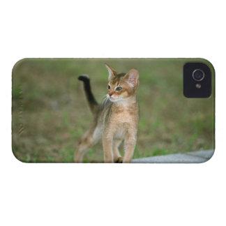 アビシニア語 Case-Mate iPhone 4 ケース