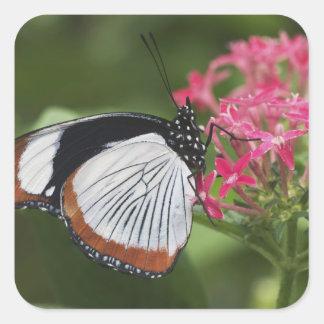 アフリカからの蝶 スクエアシール