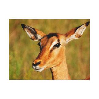 アフリカのインパラのKrugerの国立公園の野生動物 キャンバスプリント