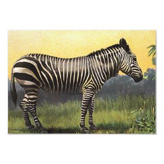 アフリカのサバンナのヴィンテージのシマウマ、野生動物 8.9 X 12.7 インビテーションカード