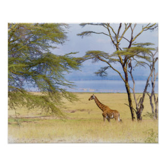 アフリカのサファリのキリンの水彩画の絵画 ポスター