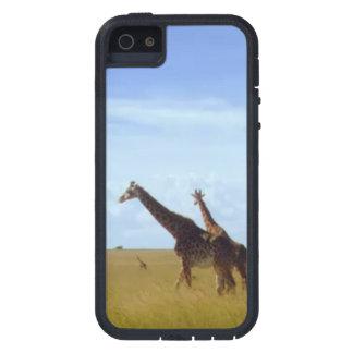 アフリカのサファリのキリン iPhone SE/5/5s ケース