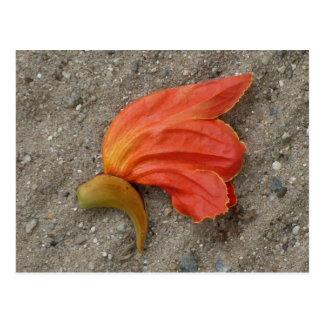 アフリカのチューリップ木の花の郵便はがき ポストカード