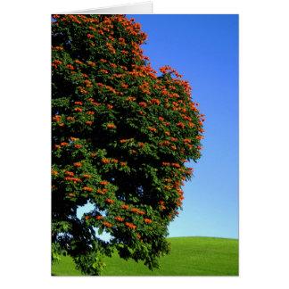 アフリカのチューリップ木 カード