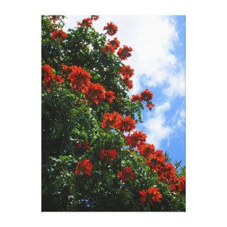 アフリカのチューリップ木 キャンバスプリント
