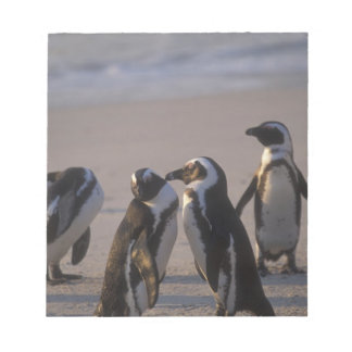アフリカのペンギン(Spheniscusのdemersus)またはろば2 ノートパッド