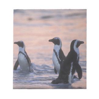 アフリカのペンギン(Spheniscusのdemersus)またはろば3 ノートパッド