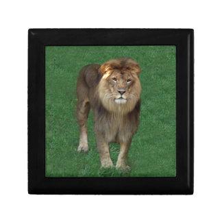 アフリカのライオン10x10 ギフトボックス