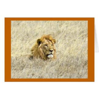アフリカのライオン カード