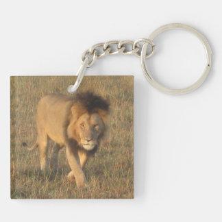 アフリカのライオン キーホルダー