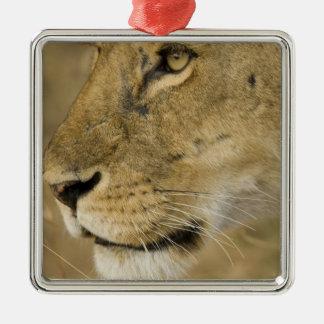 アフリカのライオン、ヒョウ属レオのポートレートの上の終わり メタルオーナメント