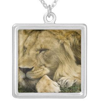 アフリカのライオン、ヒョウ属レオの眠った置くこと シルバープレートネックレス