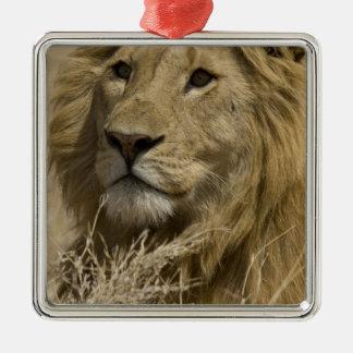 アフリカのライオン、ヒョウ属レオのaのポートレート メタルオーナメント