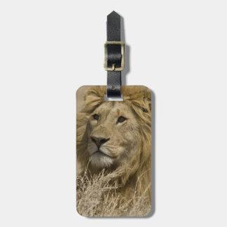 アフリカのライオン、ヒョウ属レオのaのポートレート ラゲッジタグ