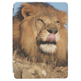 アフリカのライオン(ヒョウ属レオ)、アフリカのサバンナ iPad AIR カバー