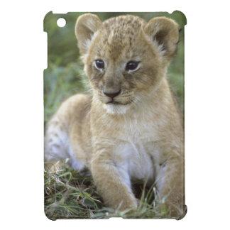 アフリカのライオン、ヒョウ属レオ)、タンザニア、 iPad MINI CASE