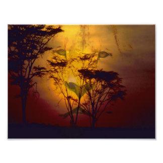アフリカの日没に見ているライオン フォトプリント