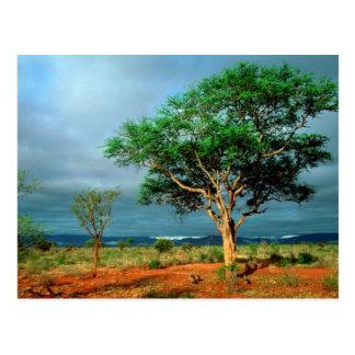 アフリカの景色のKrugerの国立公園 ポストカード