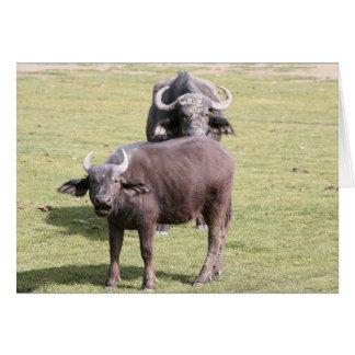 アフリカの水牛 カード