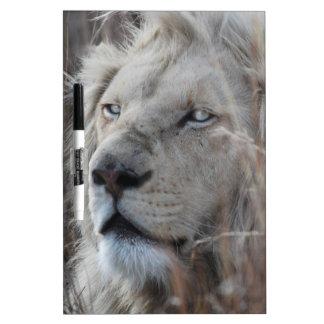 アフリカの白いライオンの休息 ホワイトボード