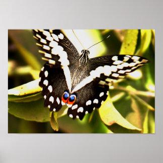 アフリカの蝶芸術作品 ポスター