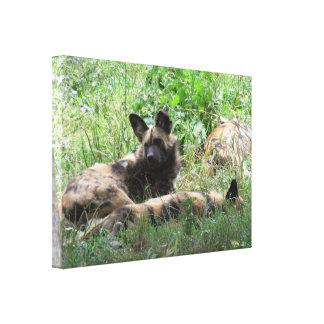 アフリカの野生の犬 キャンバスプリント