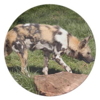 アフリカの野生の犬 プレート