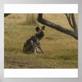 アフリカの野生の犬 ポスター