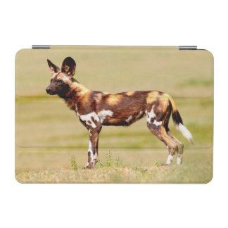 アフリカの野生の犬(Lycaon Pictus)の地位 iPad Miniカバー