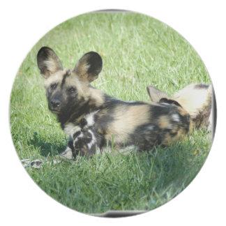 アフリカの野生dog_10x10 プレート