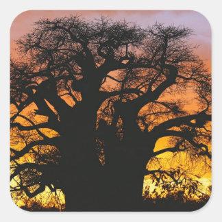 アフリカのbaobabの木、バオバブのdigitata、 スクエアシール