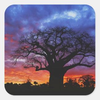 アフリカのbaobabの木、バオバブのdigitata、2 スクエアシール