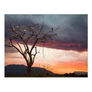 アフリカのSpoonbillsのKandheriの泥地の日没 ポストカード