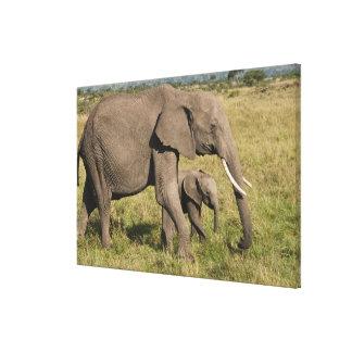 アフリカゾウおよび幼いこども(Loxodontaのafricana)、 キャンバスプリント